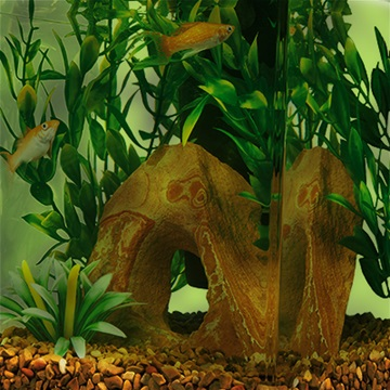 3 common aquarium water issues