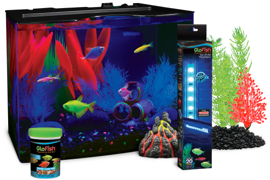 glofish174 the most colorful pets for the most dazzling
