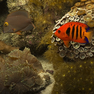 The 5 basic types of saltwater aquariums