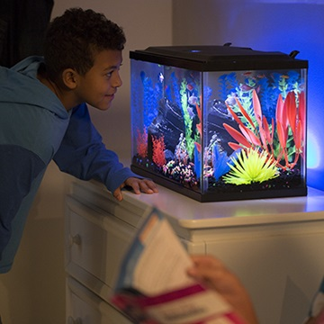 The therapeutic effects of aquariums