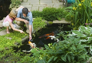 Step 1 of pond building is choosing where to put a pond location.