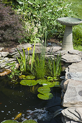 How to control algae and green water in your pond tetra for Pond shade ideas
