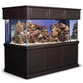 Find A Wide Selection Of Fish Tank Or Aquarium Stands And Canopies At Marineland