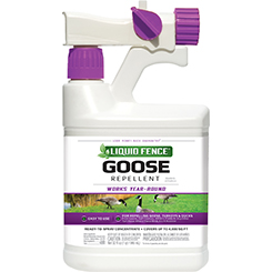 Goose Repellent (Concentrate Ready-To-Spray)