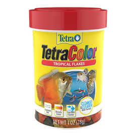 A Beginners Guide To Successful Fish Keeping Tetra